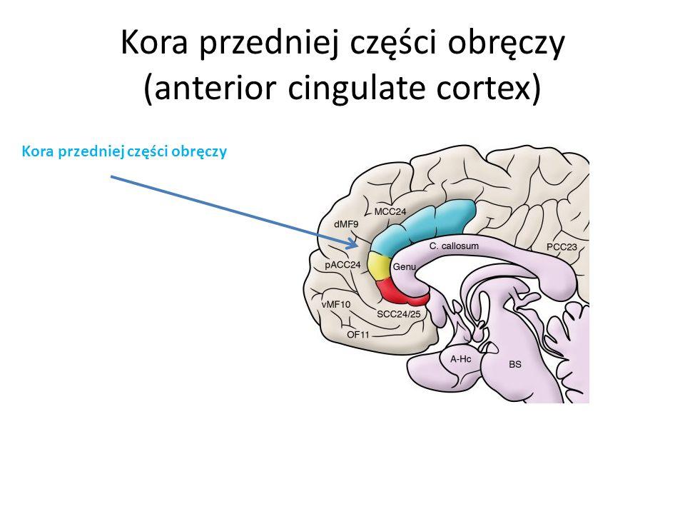 Kora przedniej części obręczy (anterior cingulate cortex) Kora przedniej części obręczy