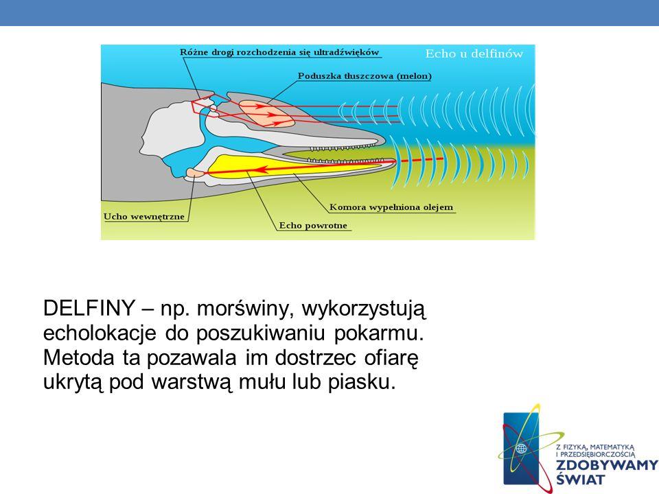 DELFINY – np. morświny, wykorzystują echolokacje do poszukiwaniu pokarmu. Metoda ta pozawala im dostrzec ofiarę ukrytą pod warstwą mułu lub piasku.