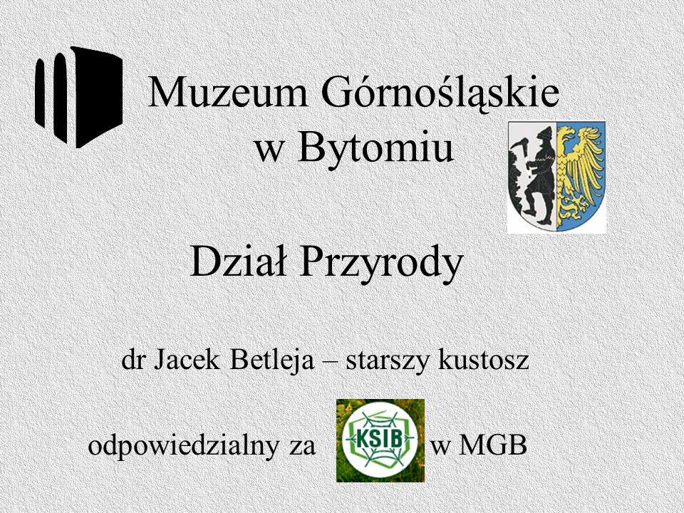 Muzeum Górnośląskie w Bytomiu dr Jacek Betleja – starszy kustosz odpowiedzialny za w MGB Dział Przyrody