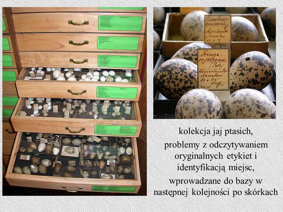 kolekcja jaj ptasich, problemy z odczytywaniem oryginalnych etykiet i identyfikacją miejsc, wprowadzane do bazy w następnej kolejności po skórkach