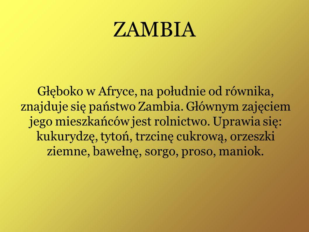 ZAMBIA Głęboko w Afryce, na południe od równika, znajduje się państwo Zambia. Głównym zajęciem jego mieszkańców jest rolnictwo. Uprawia się: kukurydzę