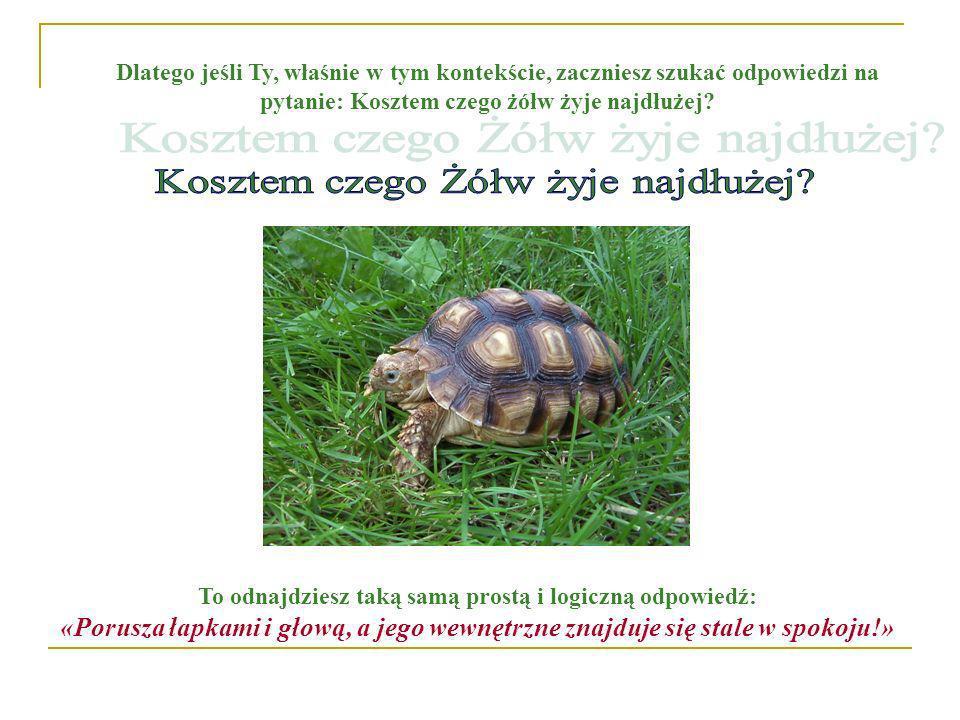 Dlatego jeśli Ty, właśnie w tym kontekście, zaczniesz szukać odpowiedzi na pytanie: Kosztem czego żółw żyje najdłużej? To odnajdziesz taką samą prostą