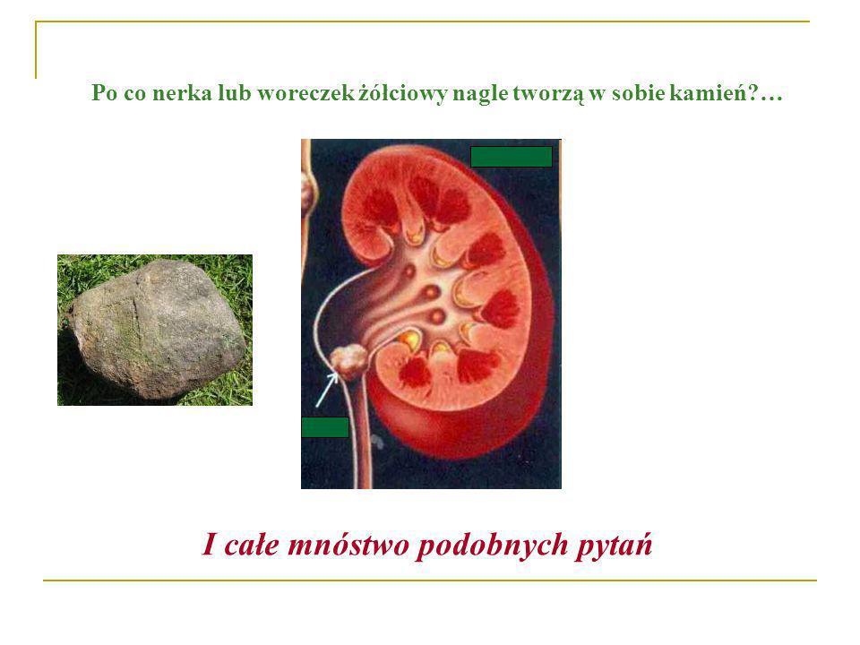 Po co nerka lub woreczek żółciowy nagle tworzą w sobie kamień?… I całe mnóstwo podobnych pytań