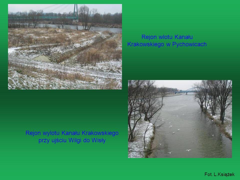 Rejon wylotu Kanału Krakowskiego przy ujściu Wilgi do Wisły Rejon wlotu Kanału Krakowskiego w Pychowicach Fot. L.Książek