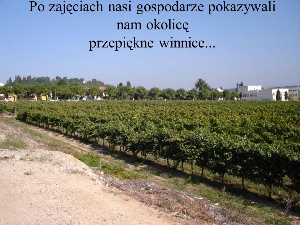 Po zajęciach nasi gospodarze pokazywali nam okolicę przepiękne winnice...