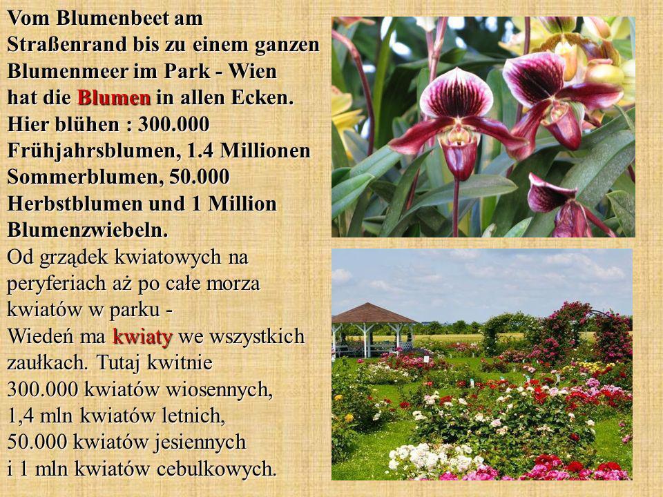 Vom Blumenbeet am Straßenrand bis zu einem ganzen Blumenmeer im Park - Wien hat die Blumen in allen Ecken. Hier blühen : 300.000 Frühjahrsblumen, 1.4