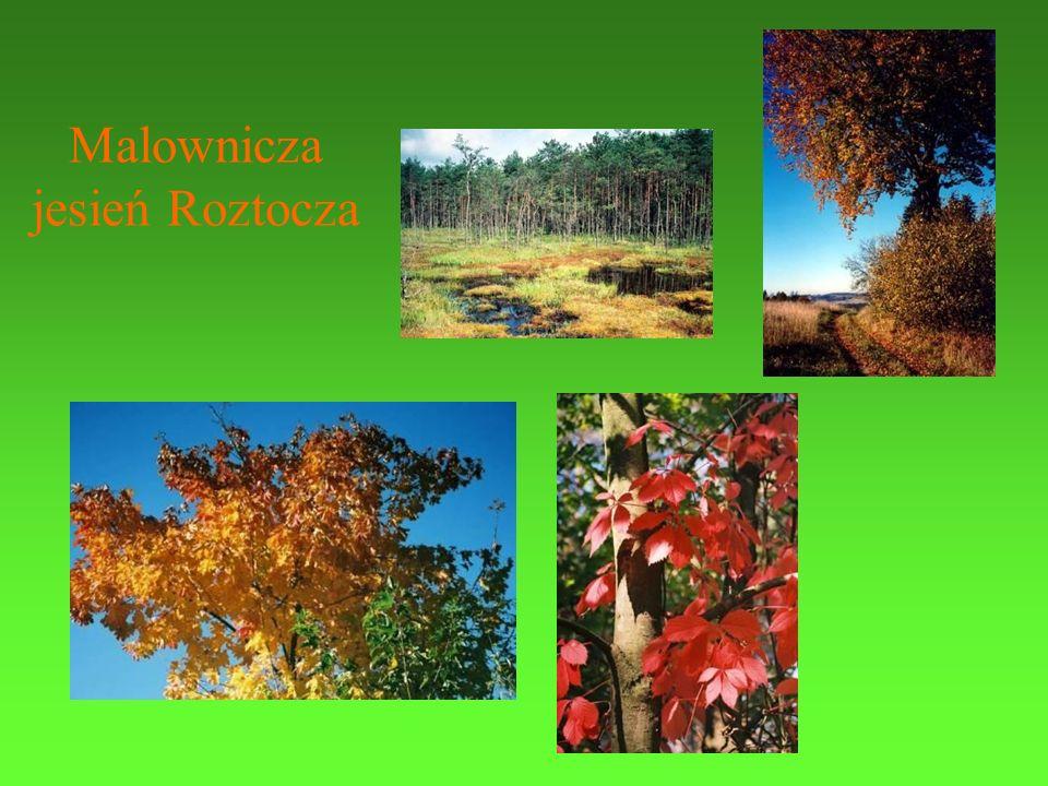 Malownicza jesień Roztocza