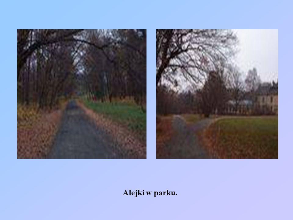 Alejki w parku.