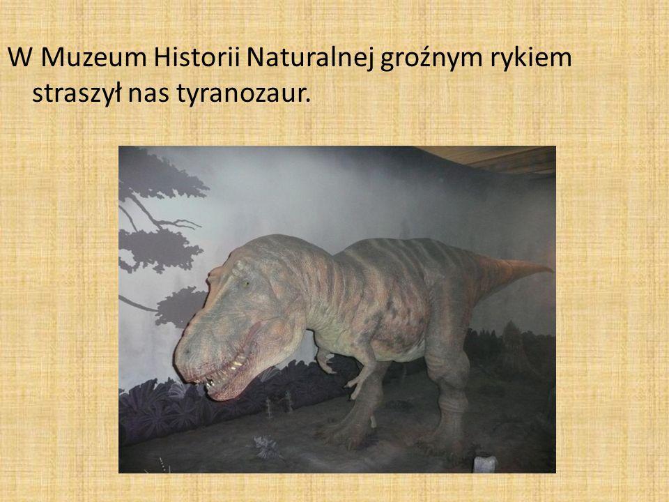 W Muzeum Historii Naturalnej groźnym rykiem straszył nas tyranozaur.