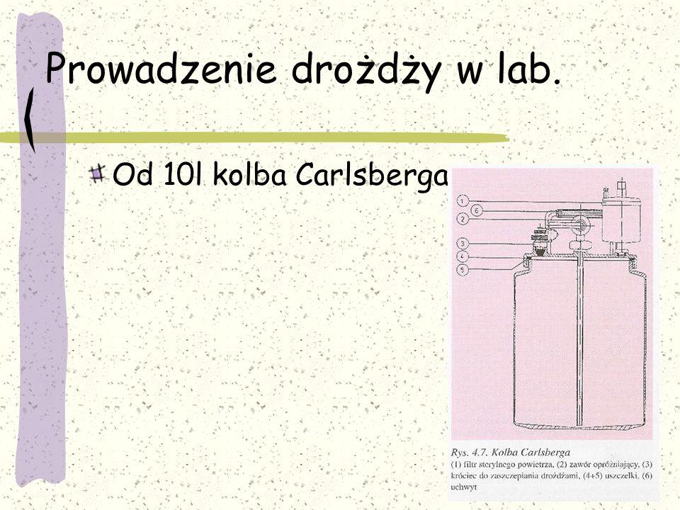 Prowadzenie drożdży w lab. Od 10l kolba Carlsberga