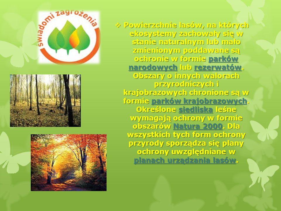 Powierzchnie lasów, na których ekosystemy zachowały się w stanie naturalnym lub mało zmienionym poddawane są ochronie w formie parków narodowych lub r