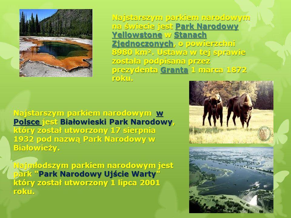 Najstarszym parkiem narodowym na świecie jest Park Narodowy Yellowstone w Stanach Zjednoczonych, o powierzchni 8980 km². Ustawa w tej sprawie została