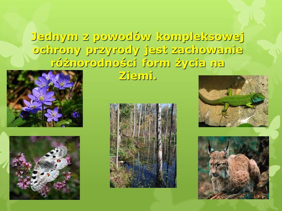 Jednym z powodów kompleksowej ochrony przyrody jest zachowanie różnorodności form życia na Ziemi. Jednym z powodów kompleksowej ochrony przyrody jest