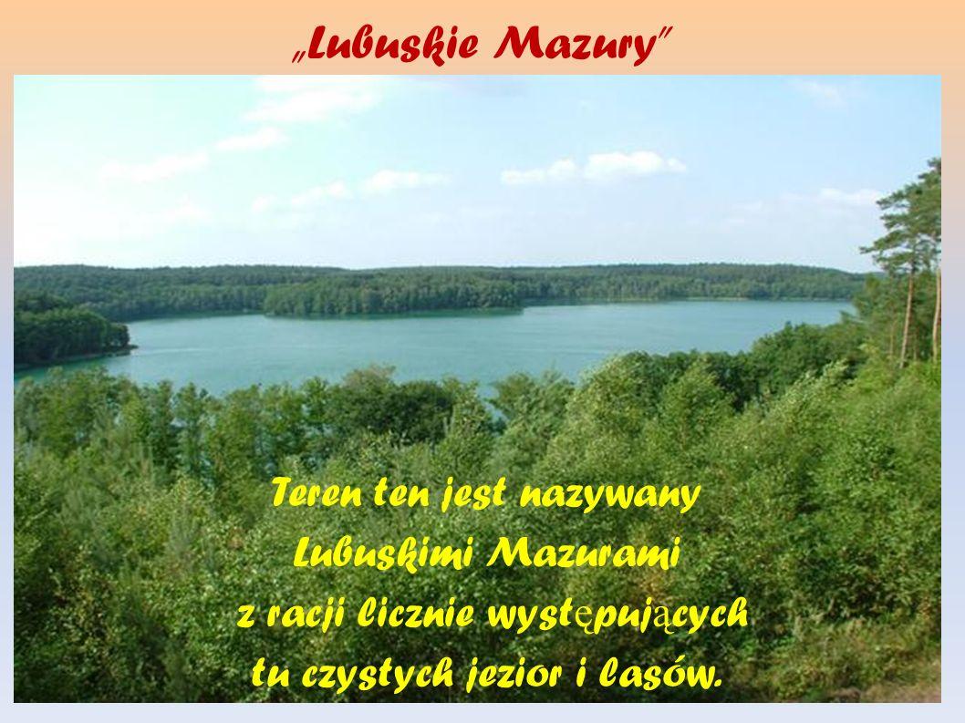Lubuskie Mazury Teren ten jest nazywany Lubuskimi Mazurami z racji licznie wyst ę puj ą cych tu czystych jezior i lasów.