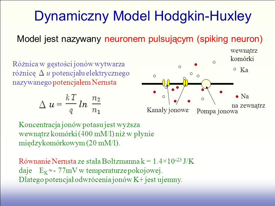 u = ln Różnica w gęstości jonów wytwarza różnicę u potencjału elektrycznego nazywanego potencjałem Nernsta Koncentracja jonów potasu jest wyższa wewną