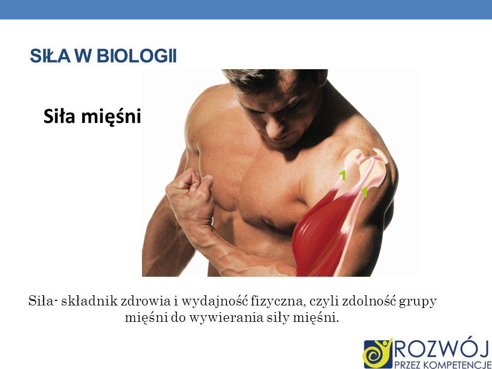 SIŁA W BIOLOGII Siła- składnik zdrowia i wydajność fizyczna, czyli zdolność grupy mięśni do wywierania siły mięśni. Siła mięśni