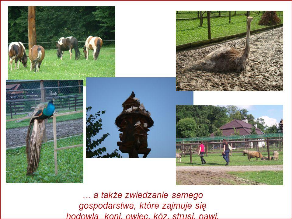 … a także zwiedzanie samego gospodarstwa, które zajmuje się hodowlą koni, owiec, kóz, strusi, pawi, gołębi