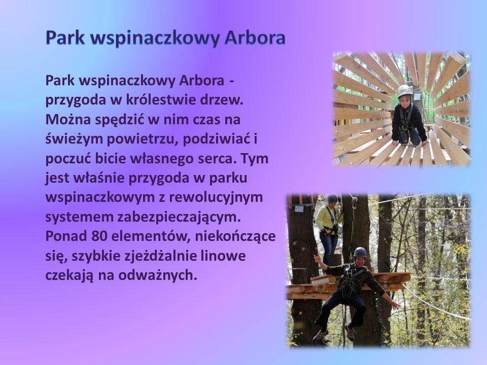 Park wspinaczkowy Arbora - przygoda w królestwie drzew.