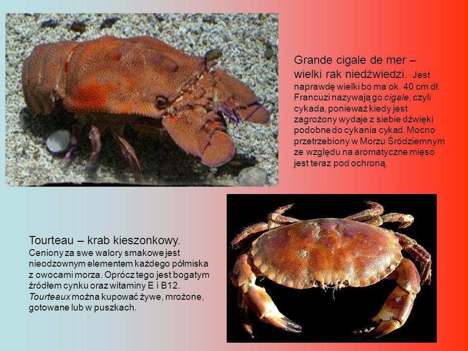 Langouste – langusta.W odróżnieniu od homara ma długie czułki i nie ma nożyc.