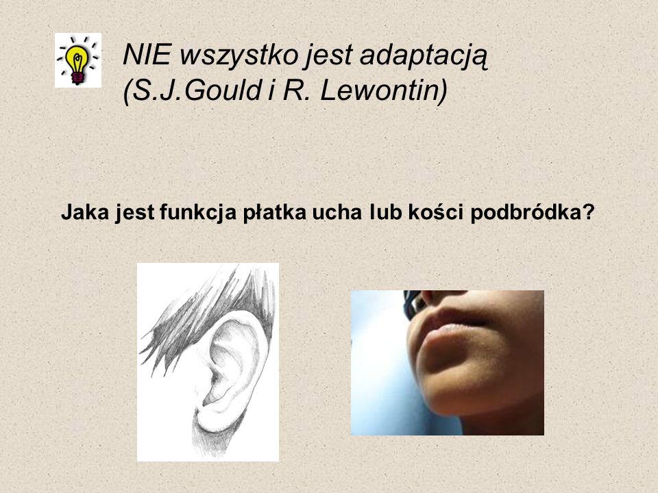 NIE wszystko jest adaptacją (S.J.Gould i R. Lewontin) Jaka jest funkcja płatka ucha lub kości podbródka?