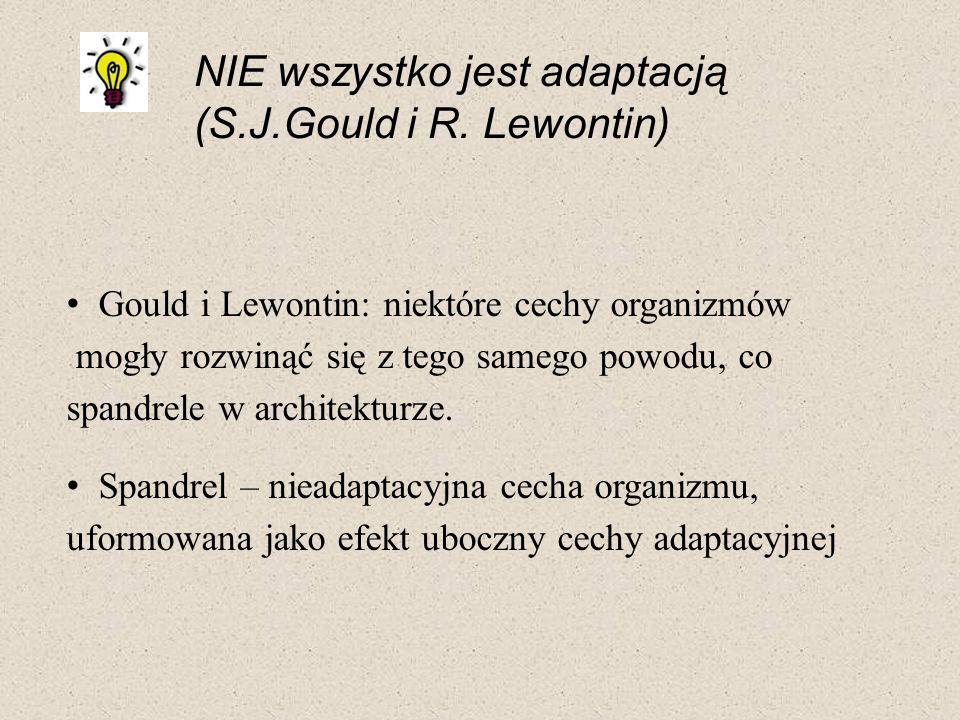 NIE wszystko jest adaptacją (S.J.Gould i R. Lewontin) Gould i Lewontin: niektóre cechy organizmów mogły rozwinąć się z tego samego powodu, co spandrel