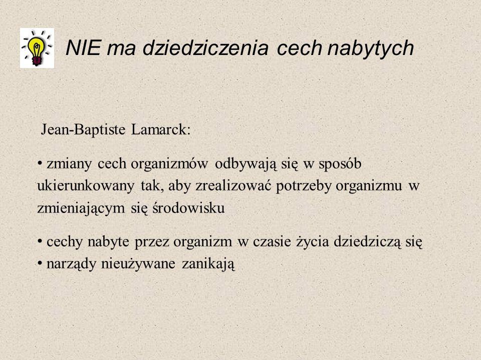 Jean-Baptiste Lamarck: NIE ma dziedziczenia cech nabytych zmiany cech organizmów odbywają się w sposób ukierunkowany tak, aby zrealizować potrzeby org