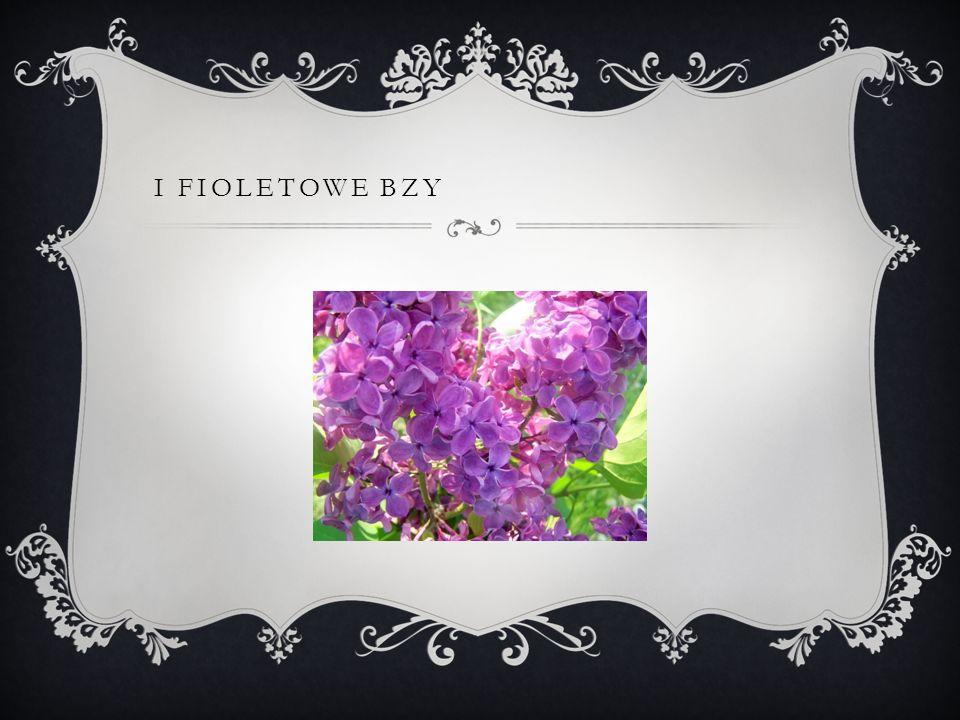 I FIOLETOWE BZY