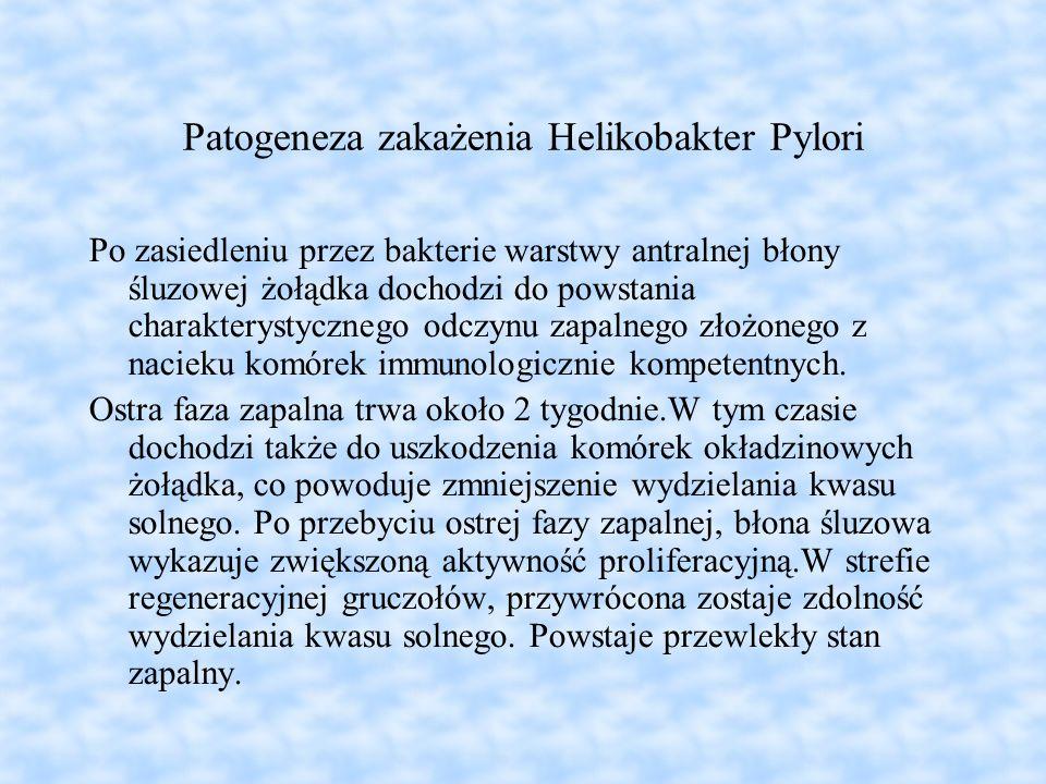 Patogeneza zakażenia Helikobakter Pylori Po zasiedleniu przez bakterie warstwy antralnej błony śluzowej żołądka dochodzi do powstania charakterystyczn