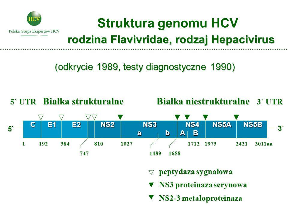 Struktura genomu HCV rodzina Flavivridae, rodzaj Hepacivirus 5` UTR Białka strukturalne Białka niestrukturalne 3` UTR peptydaza sygnałowa NS3 proteina