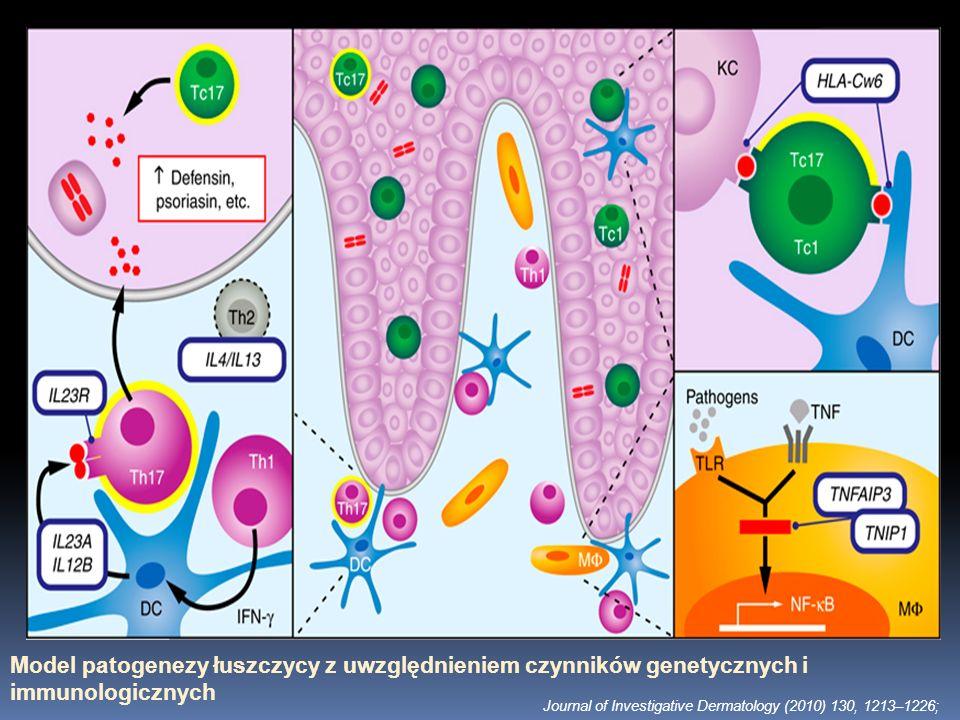 Model patogenezy łuszczycy z uwzględnieniem czynników genetycznych i immunologicznych Journal of Investigative Dermatology (2010) 130, 1213–1226;