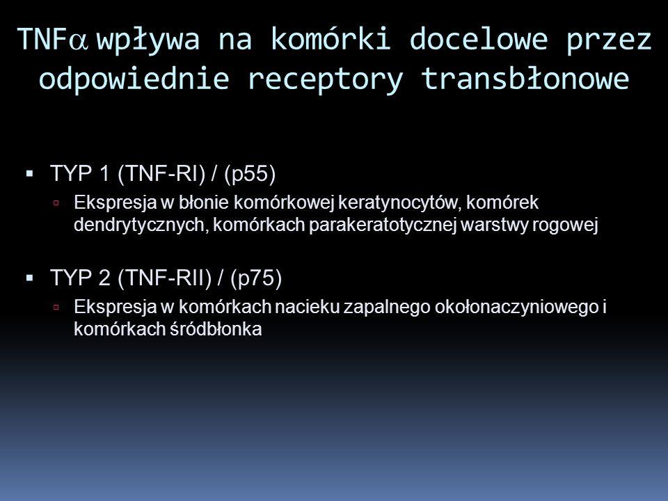 TNFwpływa na komórki docelowe przez odpowiednie receptory transbłonowe TYP 1 (TNF-RI) / (p55) Ekspresja w błonie komórkowej keratynocytów, komórek den