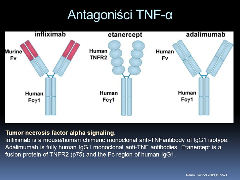 Antagoniści TNF-α Tumor necrosis factor alpha signaling. Infliximab is a mouse/human chimeric monoclonal anti-TNFantibody of IgG1 isotype. Adalimumab