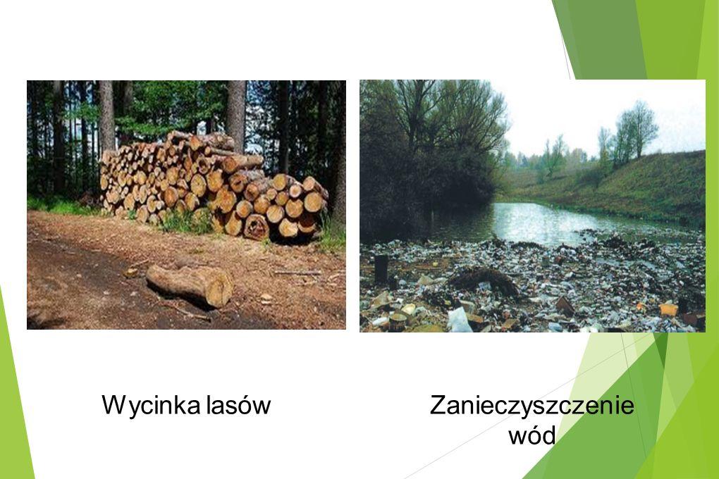 Wycinka lasówZanieczyszczenie wód
