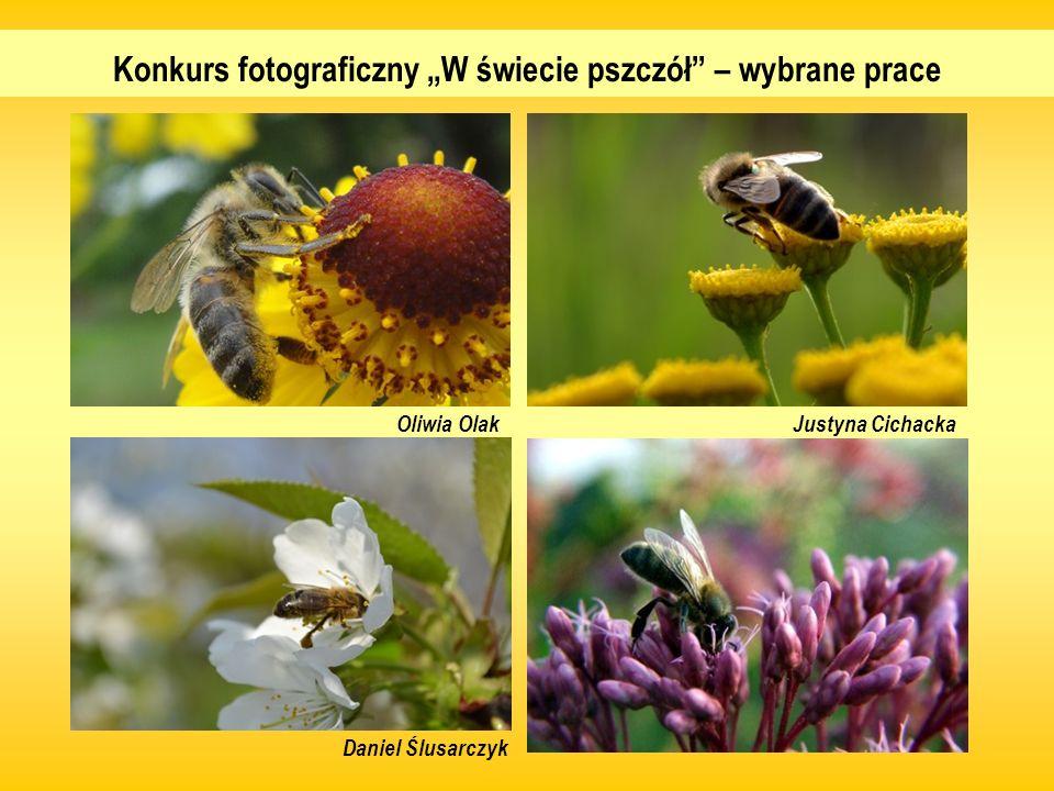Konkurs fotograficzny W świecie pszczół – wybrane prace Daniel Ślusarczyk Oliwia OlakJustyna Cichacka