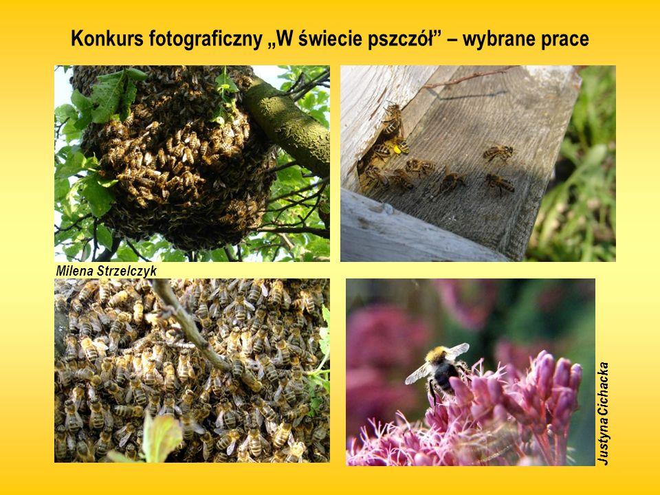 Konkurs fotograficzny W świecie pszczół – wybrane prace Justyna Cichacka Milena Strzelczyk