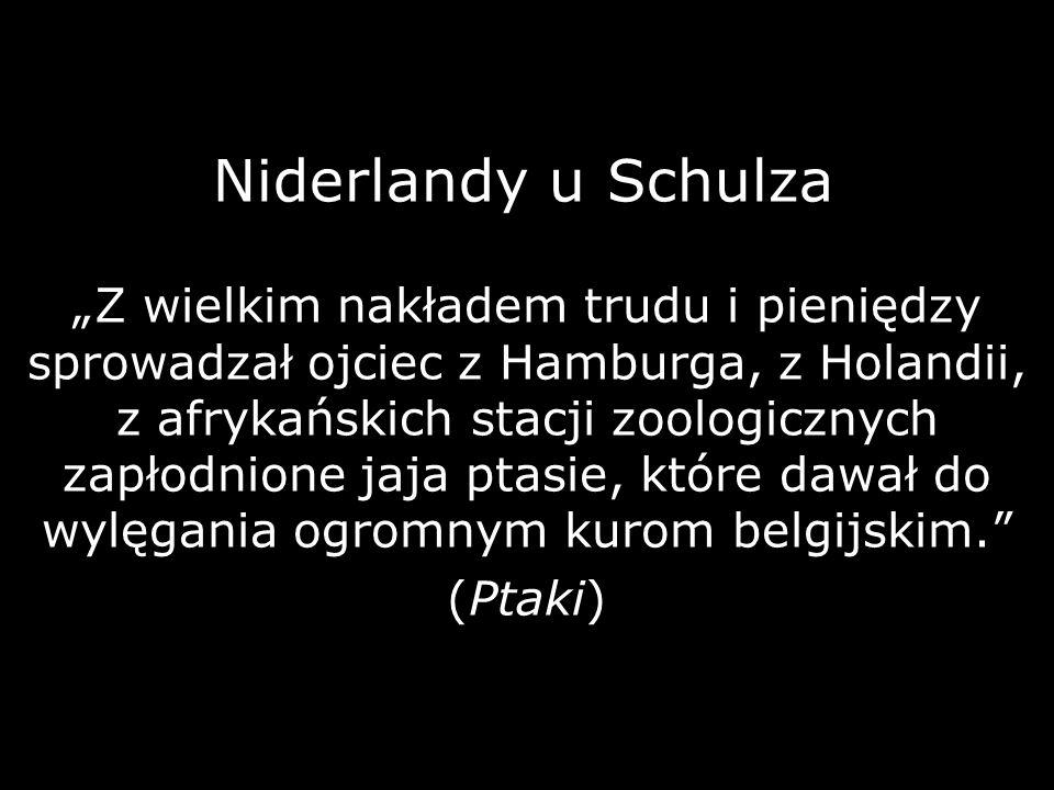 Niderlandy u Schulza Z wielkim nakładem trudu i pieniędzy sprowadzał ojciec z Hamburga, z Holandii, z afrykańskich stacji zoologicznych zapłodnione ja