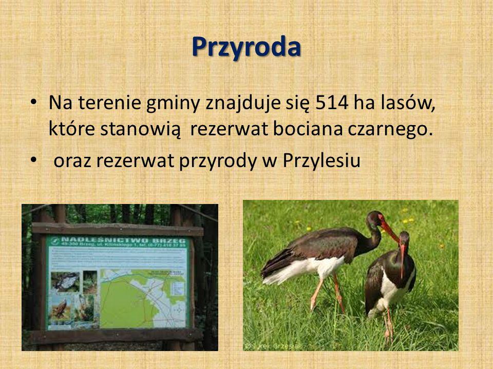 Przyroda Na terenie gminy znajduje się 514 ha lasów, które stanowią rezerwat bociana czarnego. oraz rezerwat przyrody w Przylesiu