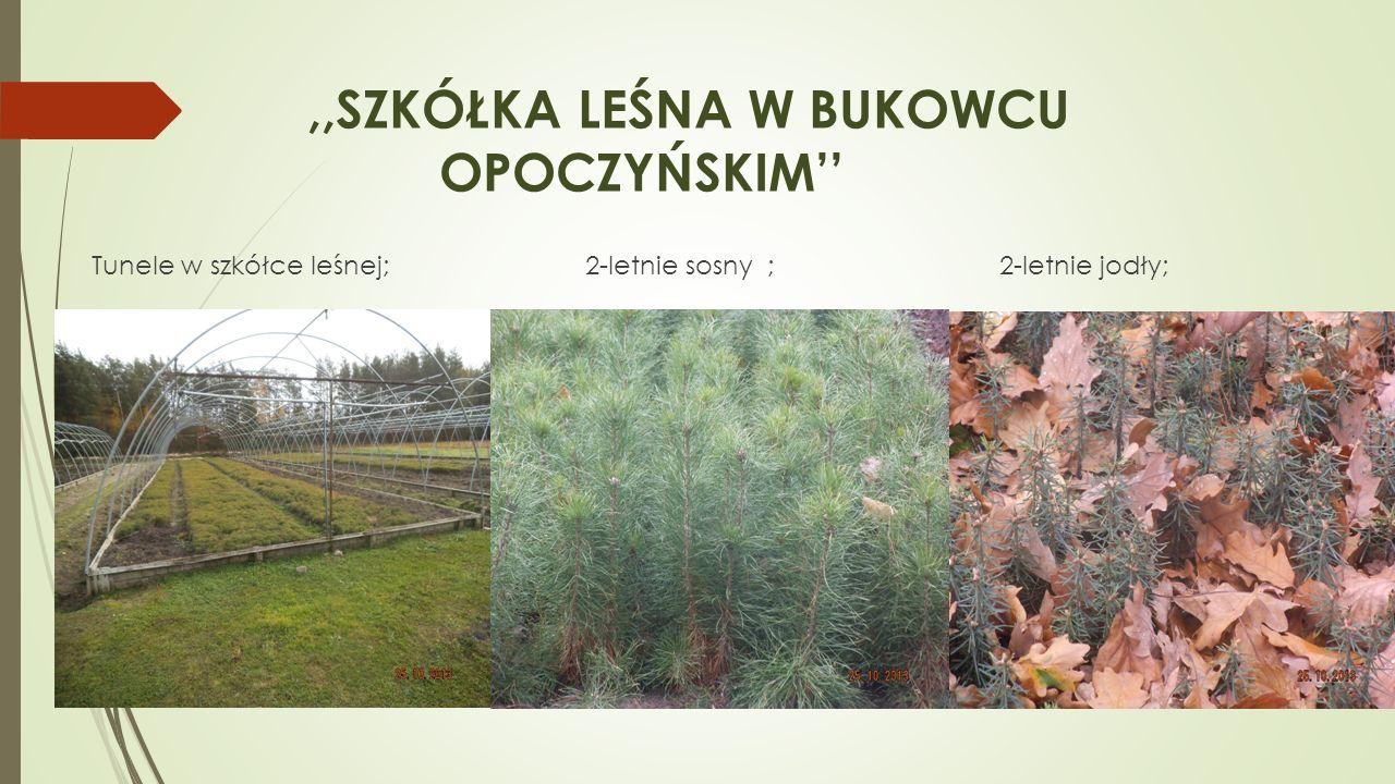 ,,SZKÓŁKA LEŚNA W BUKOWCU OPOCZYŃSKIM Tunele w szkółce leśnej; 2-letnie sosny ; 2-letnie jodły;