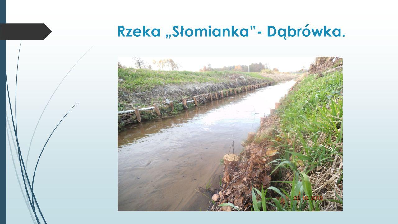 Rzeka Słomianka- Dąbrówka.