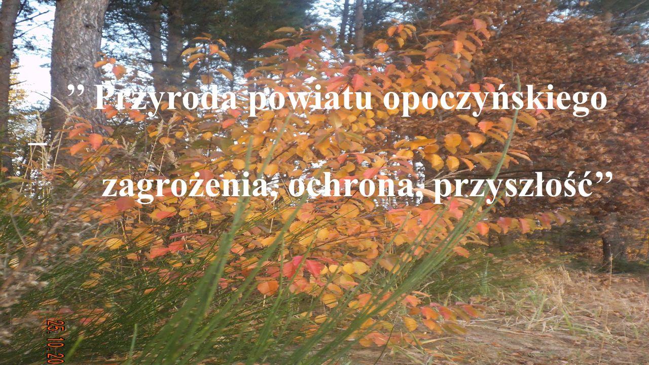 Przyroda powiatu opoczyńskiego – zagrożenia, ochrona, przyszłość
