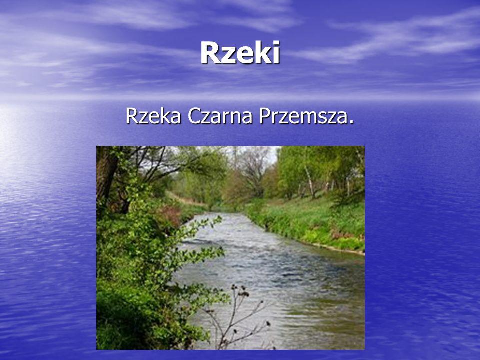 Rzeki Rzeka Czarna Przemsza.