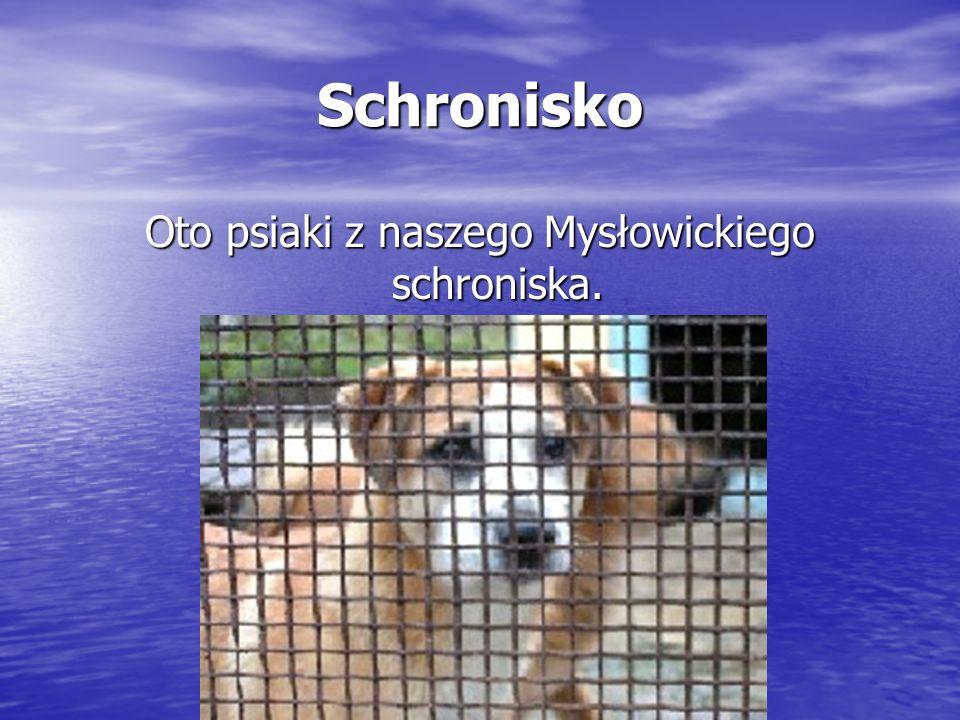 Schronisko Oto psiaki z naszego Mysłowickiego schroniska.