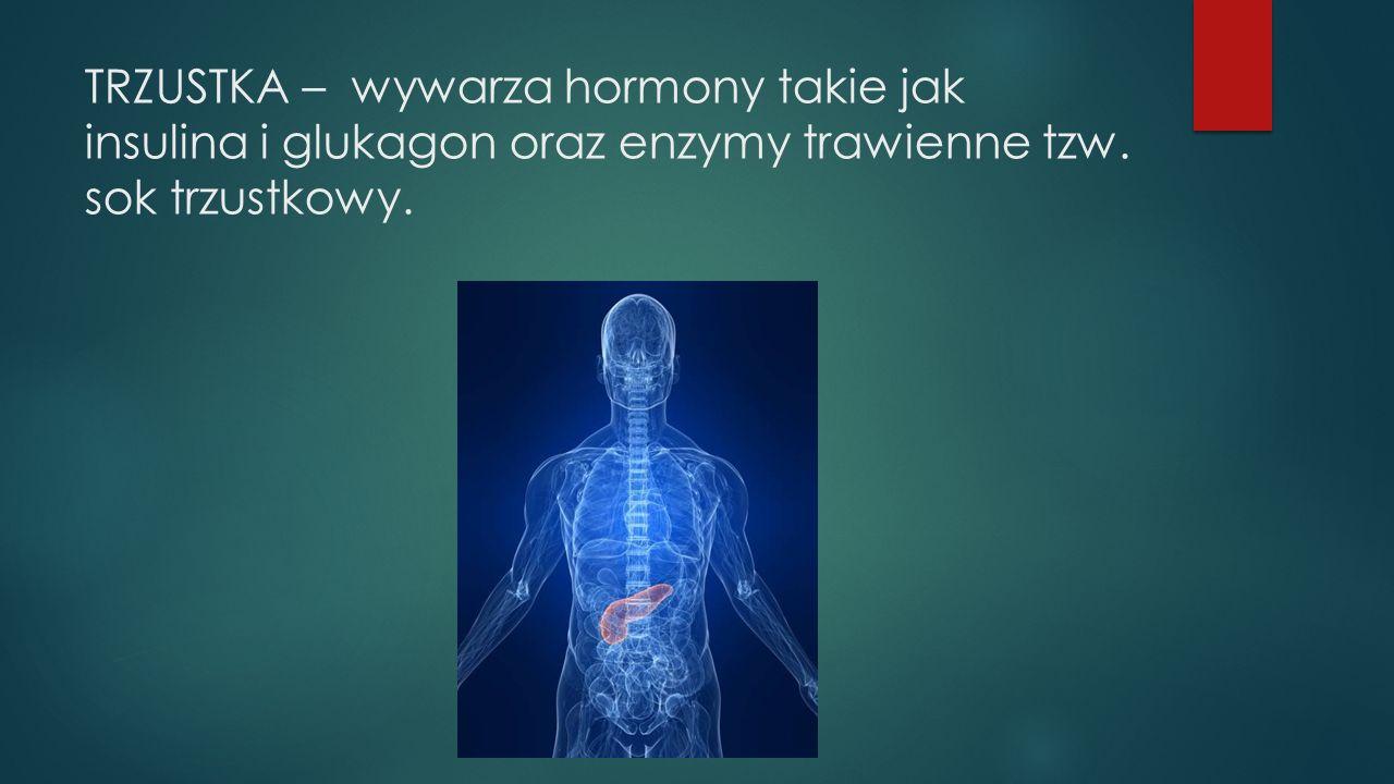 TRZUSTKA – wywarza hormony takie jak insulina i glukagon oraz enzymy trawienne tzw. sok trzustkowy.