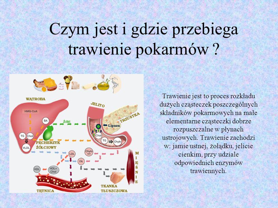 Jak zbudowany jest nasz układ pokarmowy ?