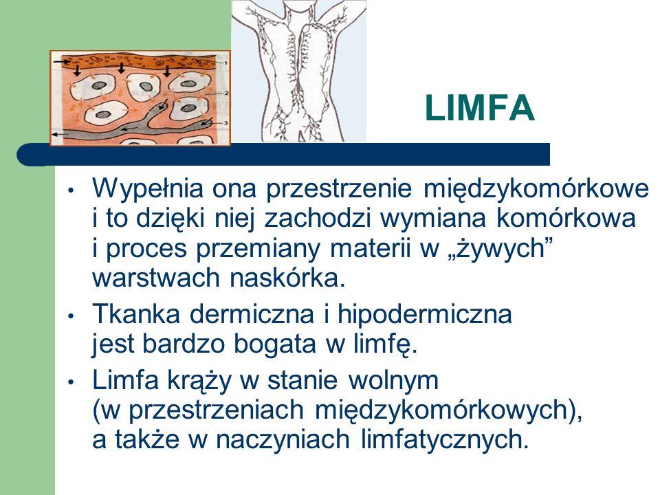 LIMFA Wypełnia ona przestrzenie międzykomórkowe i to dzięki niej zachodzi wymiana komórkowa i proces przemiany materii w żywych warstwach naskórka. Tk