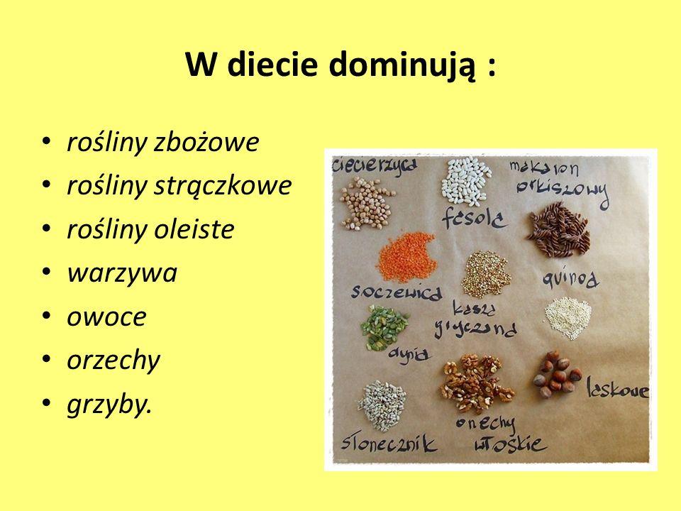 W diecie dominują : rośliny zbożowe rośliny strączkowe rośliny oleiste warzywa owoce orzechy grzyby.