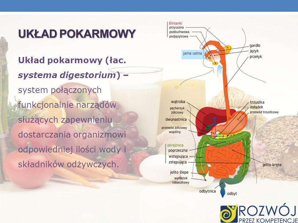 UKŁAD POKARMOWY Układ pokarmowy (łac. systema digestorium) – system połączonych funkcjonalnie narządów służących zapewnieniu dostarczania organizmowi