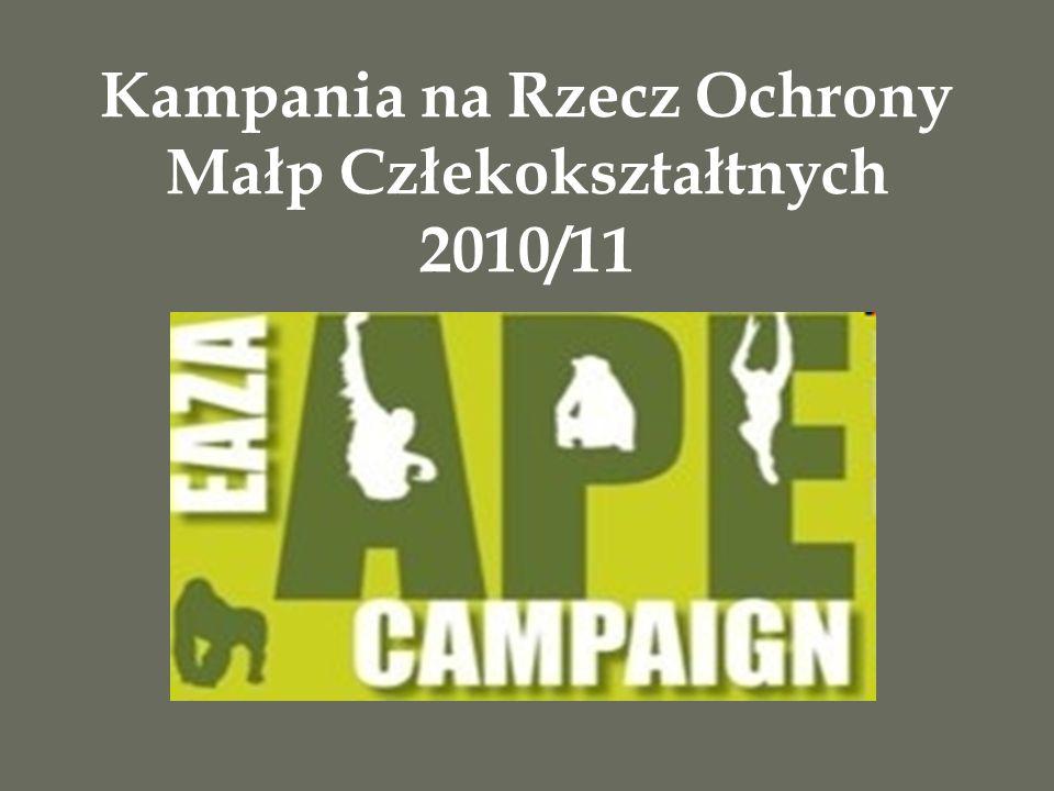 Kampania na Rzecz Ochrony Małp Człekokształtnych 2010/11
