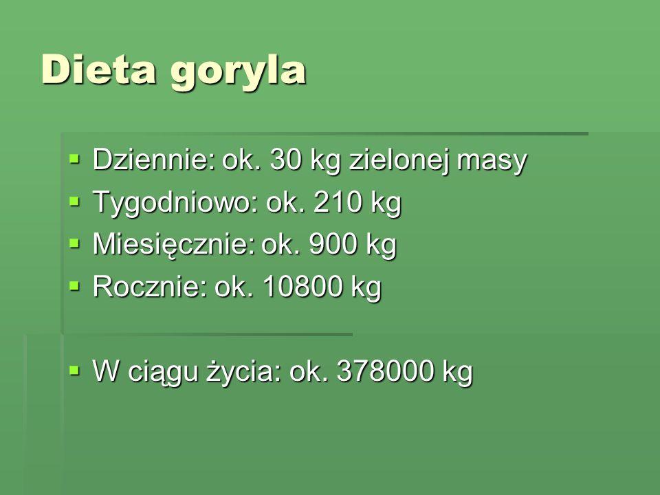 Dieta goryla Dziennie: ok. 30 kg zielonej masy Dziennie: ok. 30 kg zielonej masy Tygodniowo: ok. 210 kg Tygodniowo: ok. 210 kg Miesięcznie: ok. 900 kg