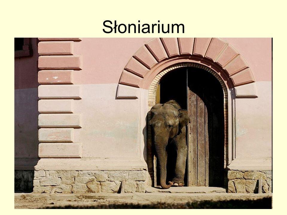 Słoniarium